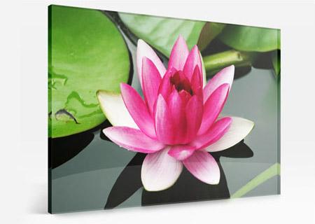 foto metacrilato colorida ejemplo loto